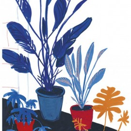 Blue plants, red pots