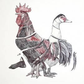 Gallo y pato