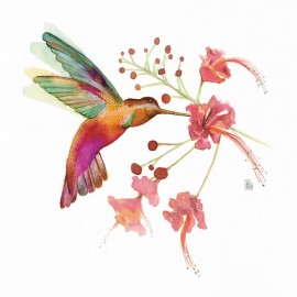 Hummingbird love #1