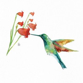 Hummingbird love #3